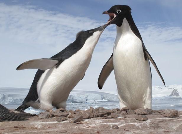 师拍摄两极地带野生动物