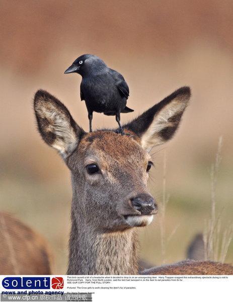 动物好朋友和谐共存 尽展自然界神奇魅力
