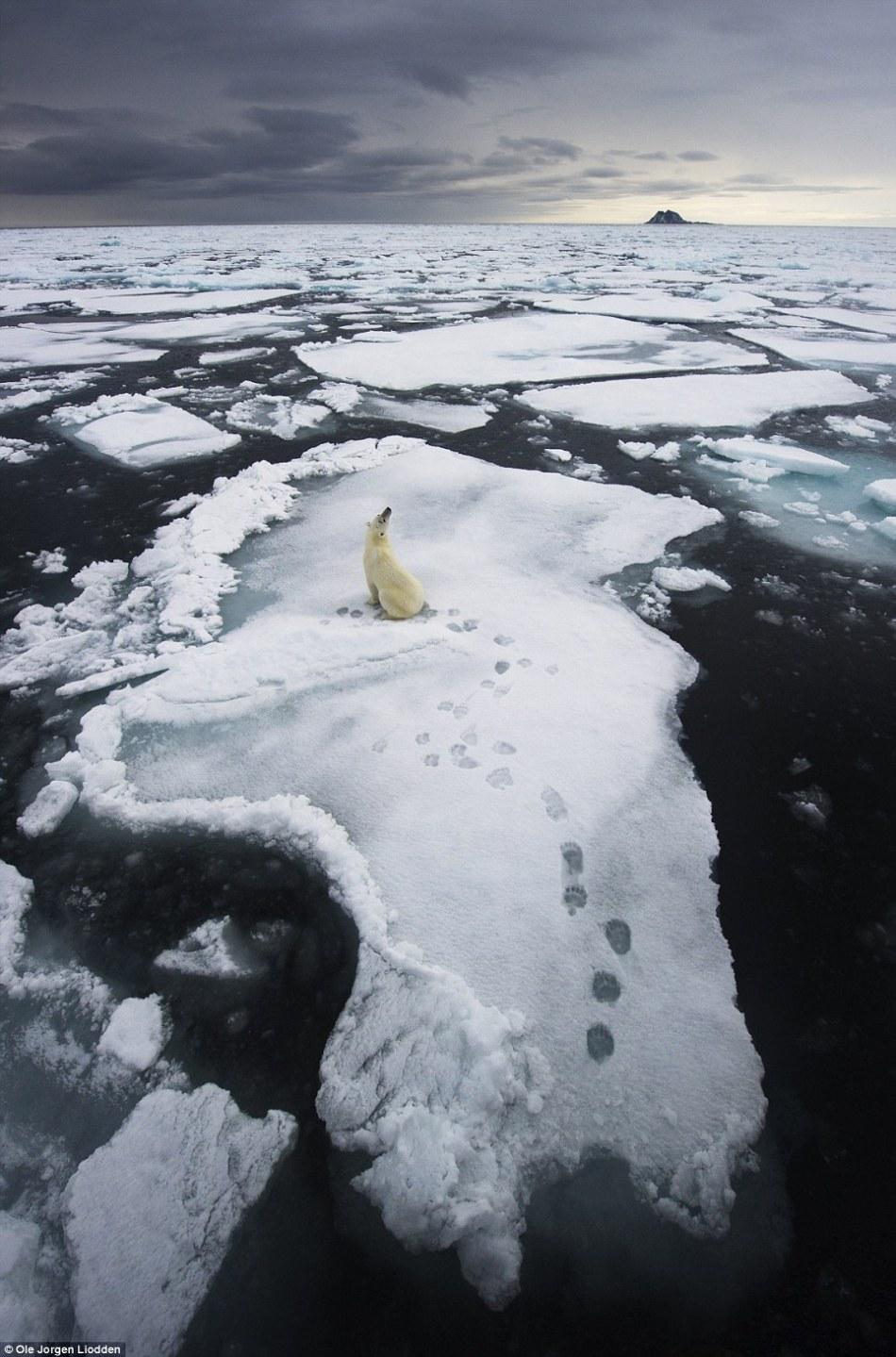 南极罗斯海的画面,获得了英国威立雅环境野生动物年度摄影师高清图片