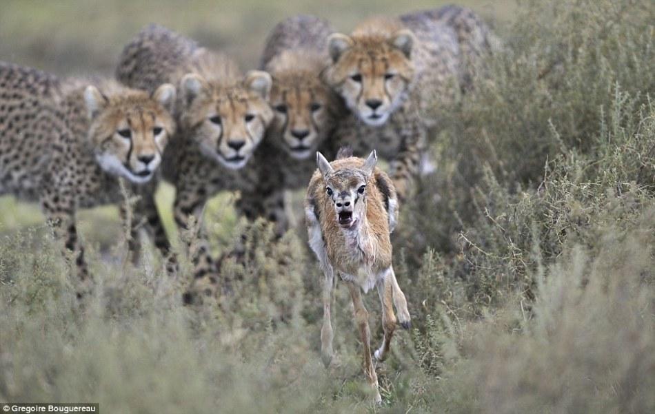 英国威立雅环境野生动物摄影获奖作品