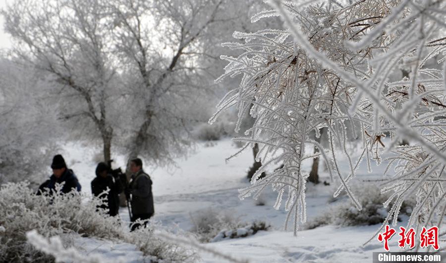 图为1月20日,摄影爱好者在新疆和硕县新塔热乡拍摄胡杨林雾凇美