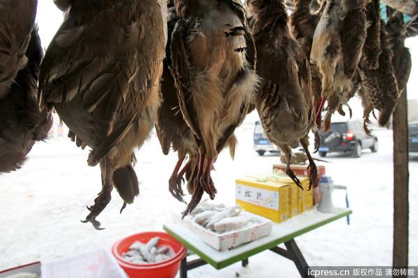 黑龙江盗猎野生动物公开出售