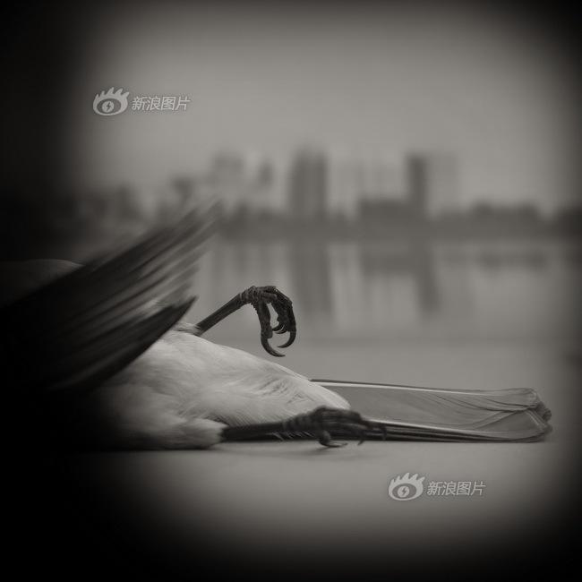 色影无忌2013新锐摄影师提名 杨洋图片