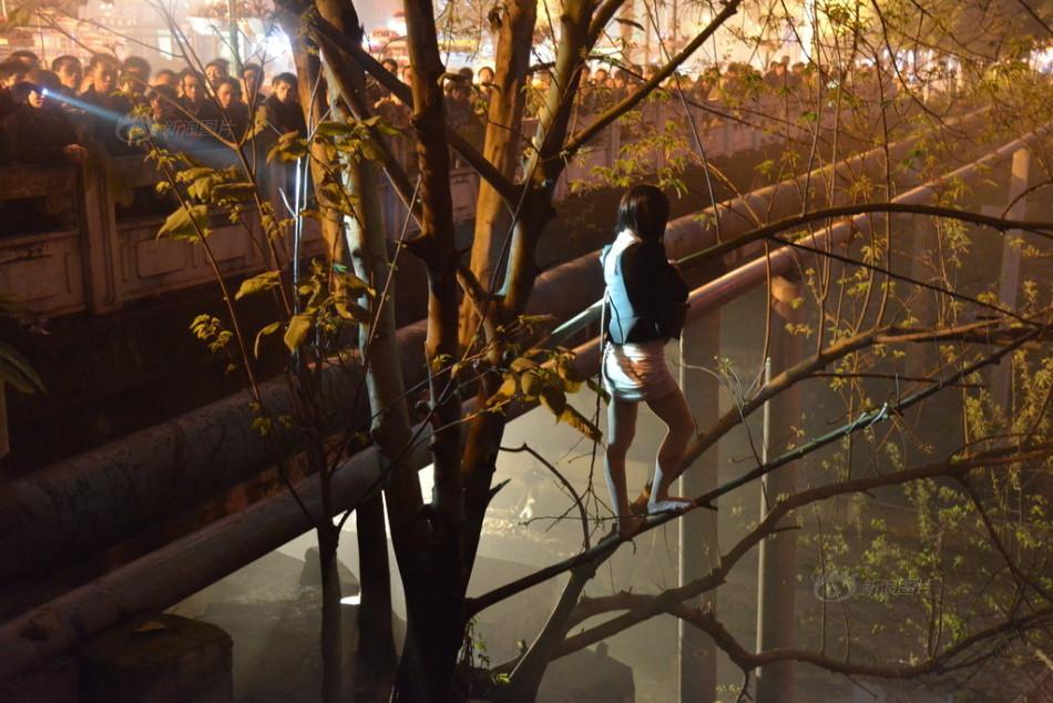 站街女遇民警爬树对峙 33人中有3人是男身