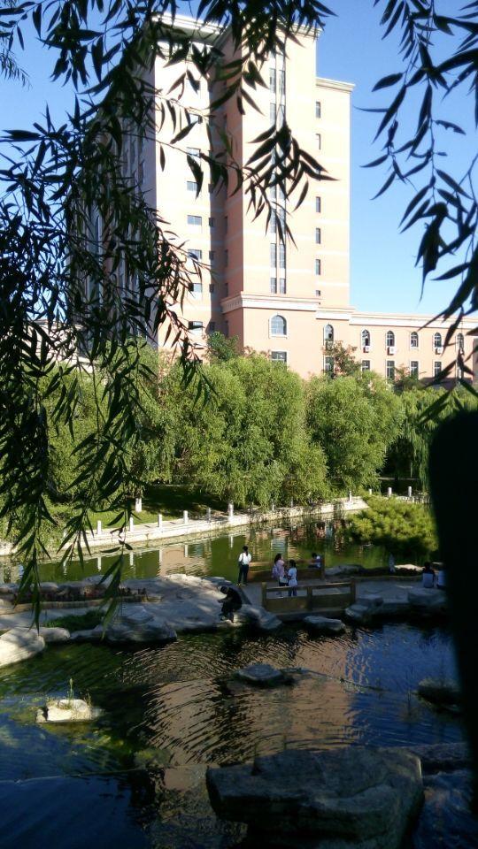 关于我的美丽的大学的风景照.-我的美丽的渤海大学图片