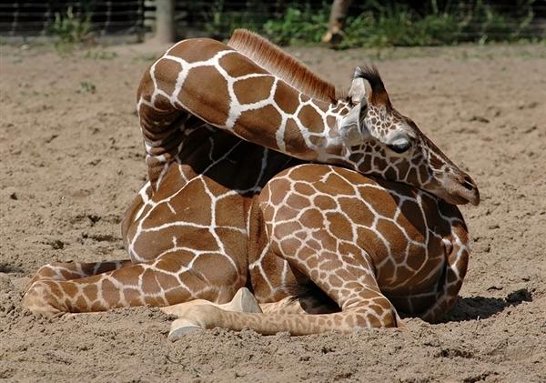 睡觉什么动物图片