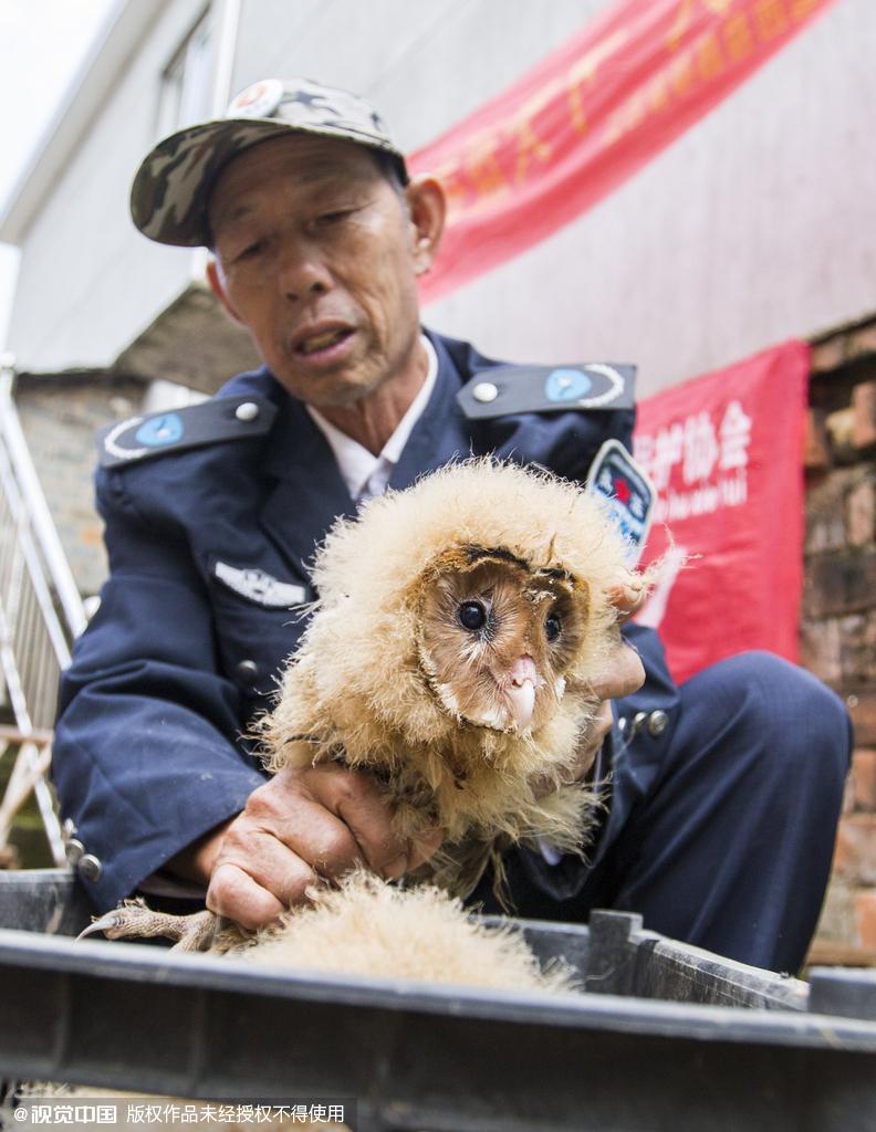 村民捡到五只猴面鹰 属国家二级保护动物