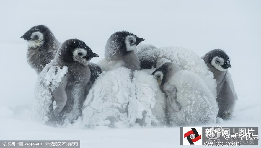 冰天雪地里的小动物 调皮惹人爱