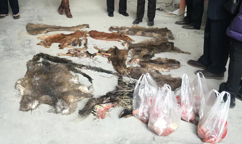 想让朋友尝鲜 他宰杀了13只野生动物
