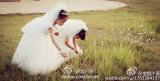 温州10对萌娃拍集体婚礼照