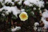 长白山天池七月降雪 景区一度停止售票