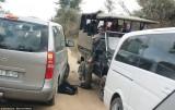 导游被豹子袭击游客救助