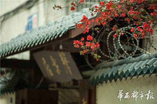 玉林路不仅仅是有小酒馆,还有满街绿植,满目鲜花.-成都玉林路花