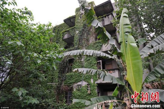 5月5日,在成都市剑南大道附近,由于长期无人居住,一栋板楼被爬高清图片
