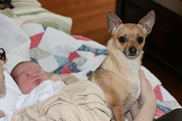 婴儿与狗的友谊