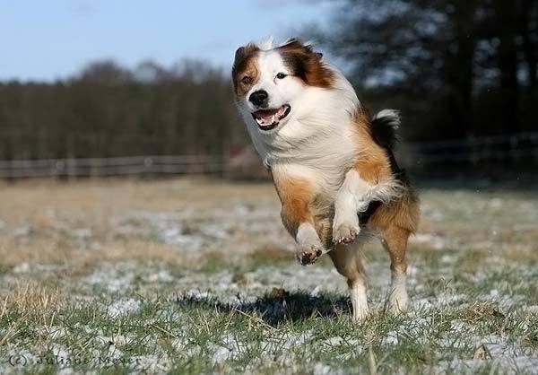 奔跑中的狗 - 游戏频道|佛山e家