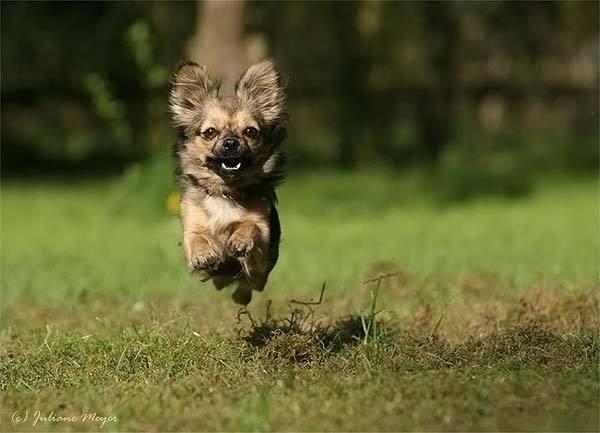 狗奔跑素材,狗奔跑背景,狗奔跑矢量图,狗奔跑图库,狗奔跑高清图片,狗