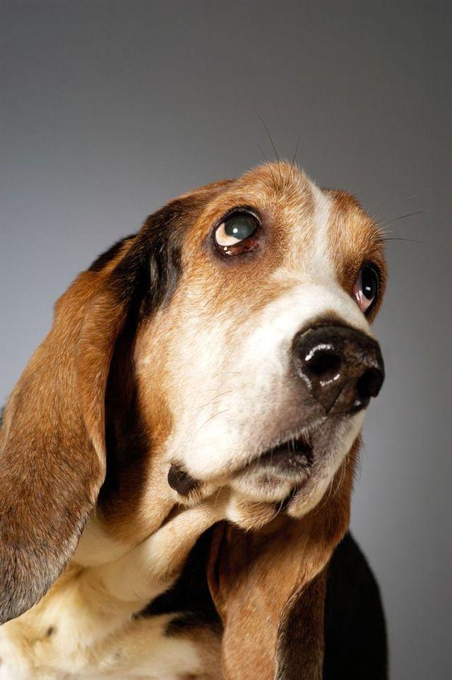 狗狗的搞怪表情图片