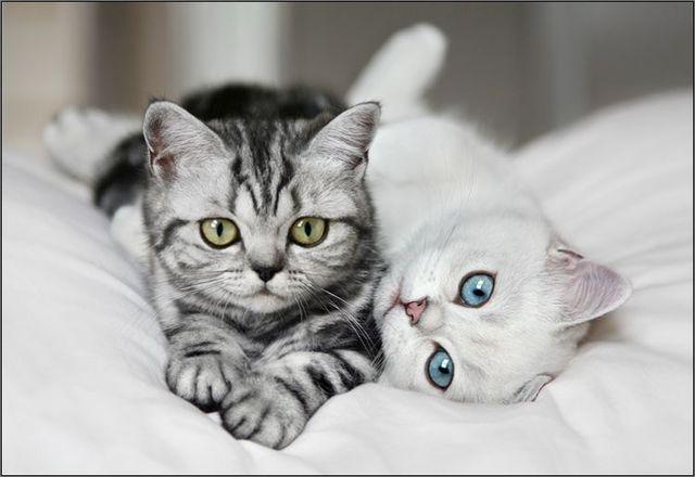 可爱猫咪摄影作品