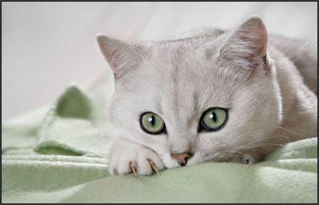 壁纸 动物 猫 猫咪 小猫 桌面 640_412