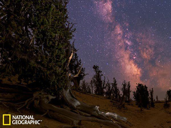 一周太空图:千年古树身后银河璀璨