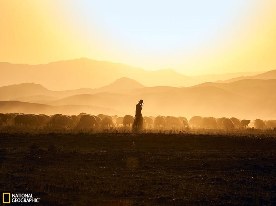 拉克的哈拉布贾附近,一位牧羊人和他的羊群沐浴在金黄的阳光之中图片