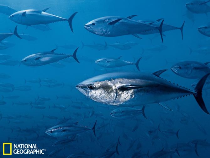 一幅关于大海动物的画