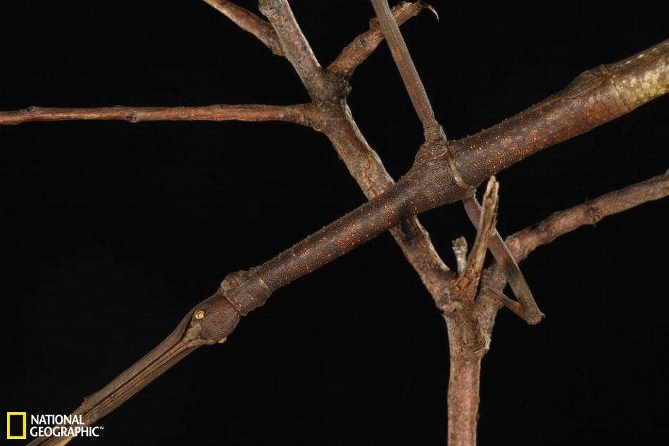 昆虫界中的伪装大师:枯叶螳螂似地面落叶