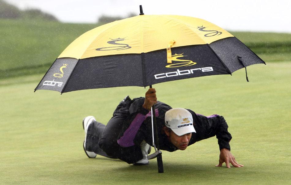 下雨了小动物都没带伞图片