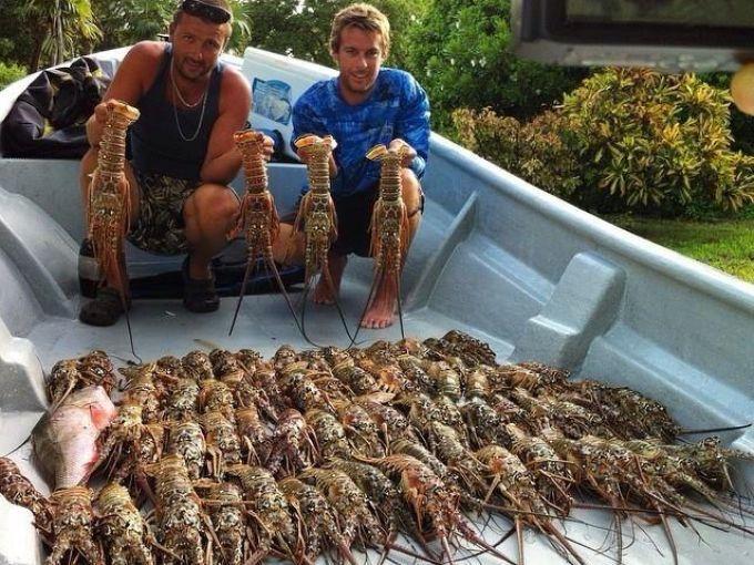 大卫(david)和克里斯(chris)兄弟俩展示在阿巴科群岛的收获.