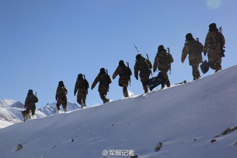 雪地里的动物的背影