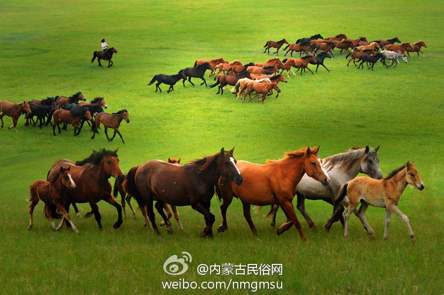 骑马看草原醉美夜色