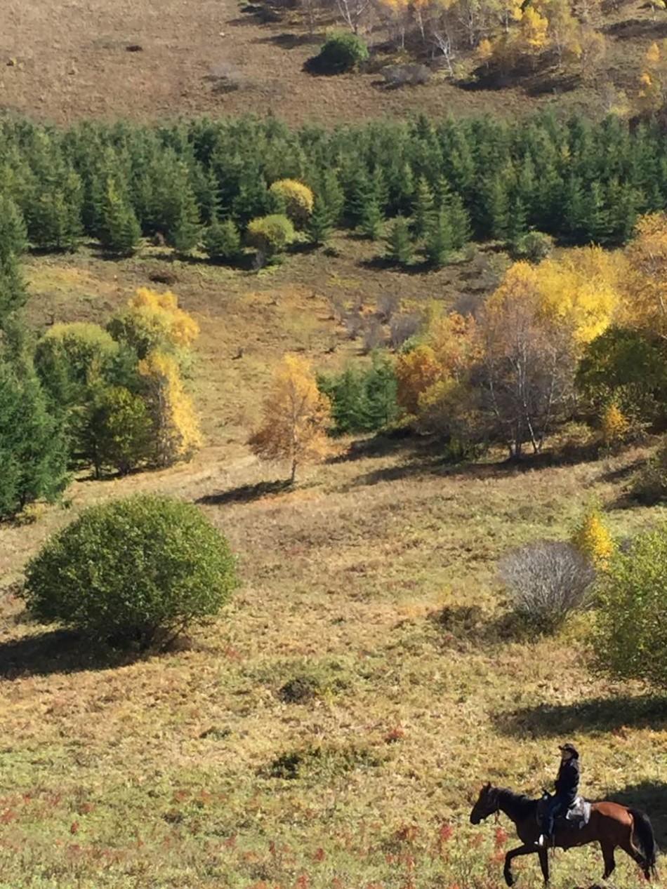群结队前往坝上草原骑马赏秋,漫山秋色美不胜收.有兴趣的小伙伴