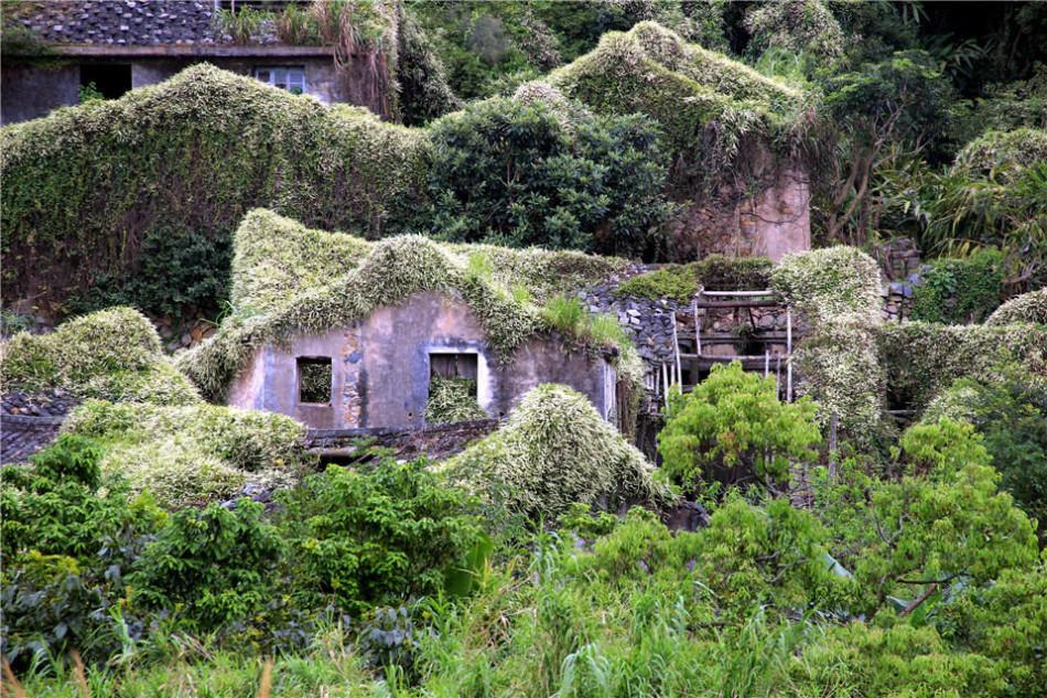 温州市苍南县马站镇霞关社区瑶洞村一古村落,废弃的房屋上长满了绿色
