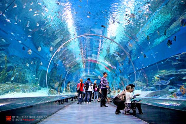 梦幻之旅 武汉极地海洋世界图片 204141 630x420