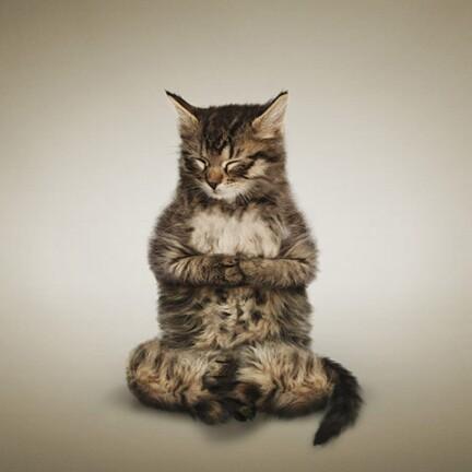 萌死人不偿命 可爱小猫小狗教你练瑜伽