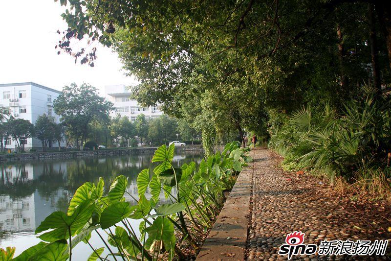 扬州大学江阳路南校区之风景篇图片