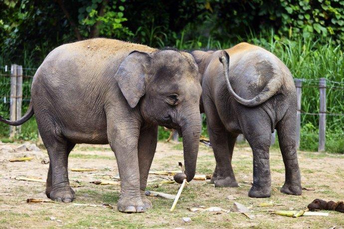 动物局营运管理,是超过一百个种类哺乳动物的家园,占地伸展达两