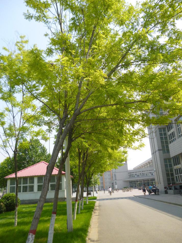 河北科技大学是河北省重点建设的多科性骨干大学.学校风景秀丽,图片