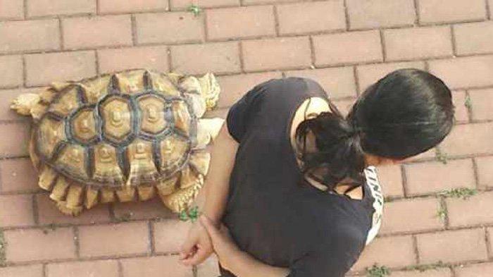 """狗,这位大姐遛乌龟.""""并在文字下方发了几张图片.图片上,一名"""