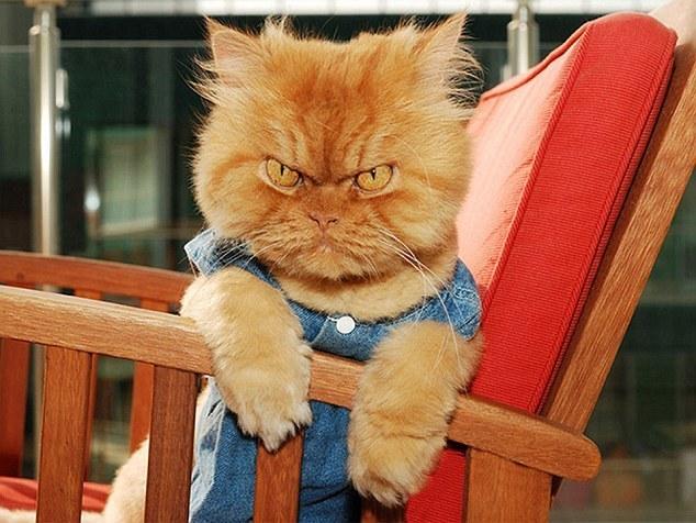 乎让这只姜黄色小猫对摄影师十分生气.猫在不高兴的时候常常表