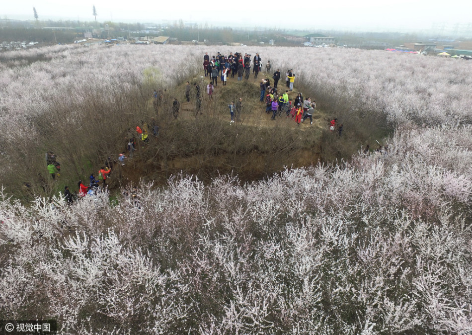 桃花林游客爆满