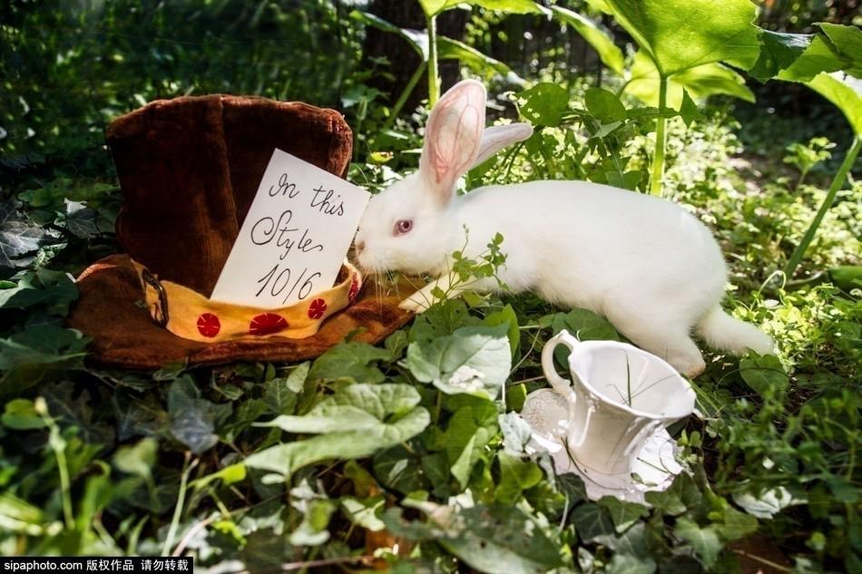 真照.小白兔、小仓鼠置身于童话世界般的场景中,可爱梦幻.-摄影