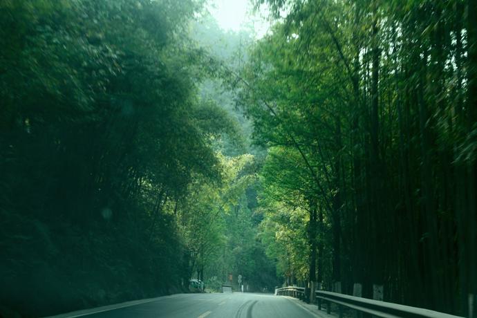 由于是3A景区,沐川竹海只要不到40元即可进入所有的地区.红色的