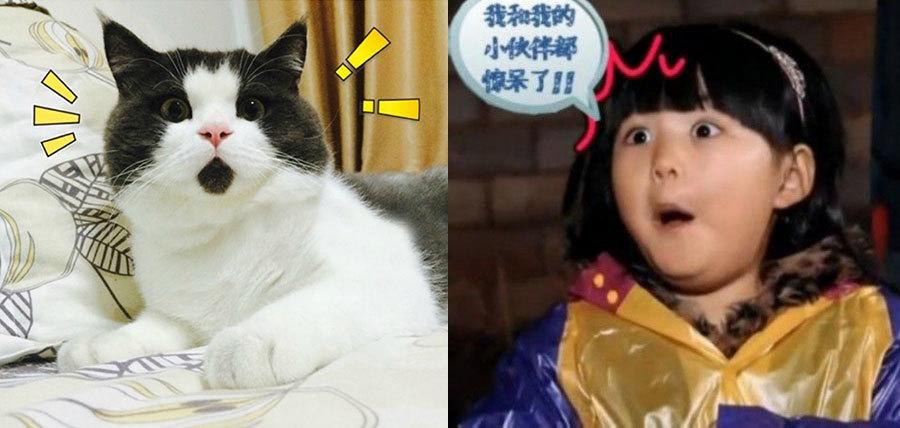 组图:OMG猫走红!肉脸激萌惊呆状神似王诗龄
