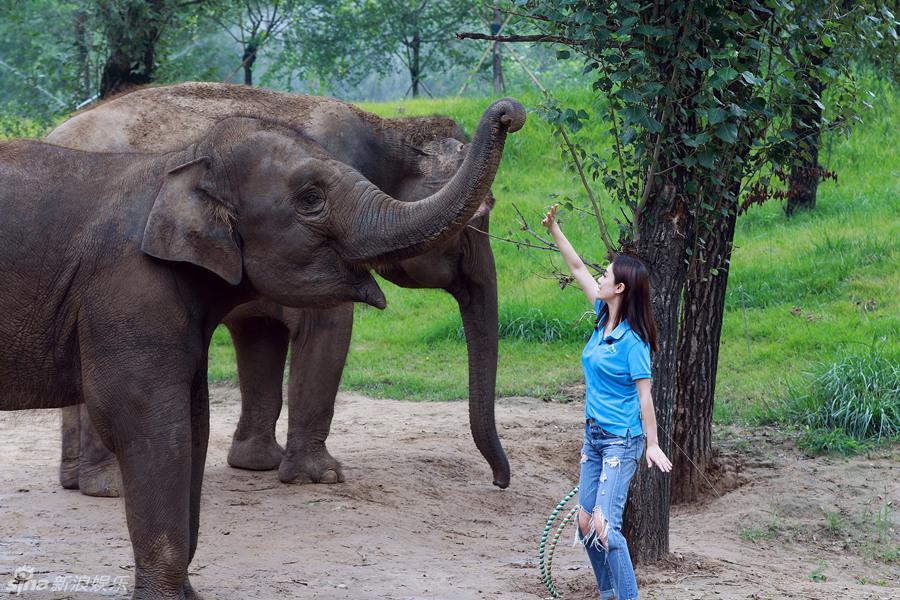 动物笑脸图片大全高清