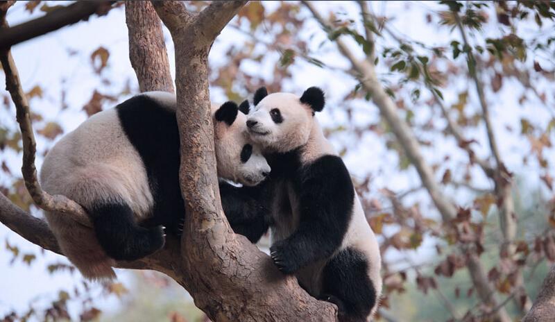说到动物,人们也会想到它们会用冬眠来御寒,其实在上海野生动物