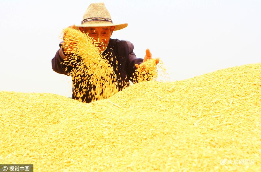 """10万余亩旱田小麦相继成熟进入收割期.来自各地的""""麦客""""驾驶联"""