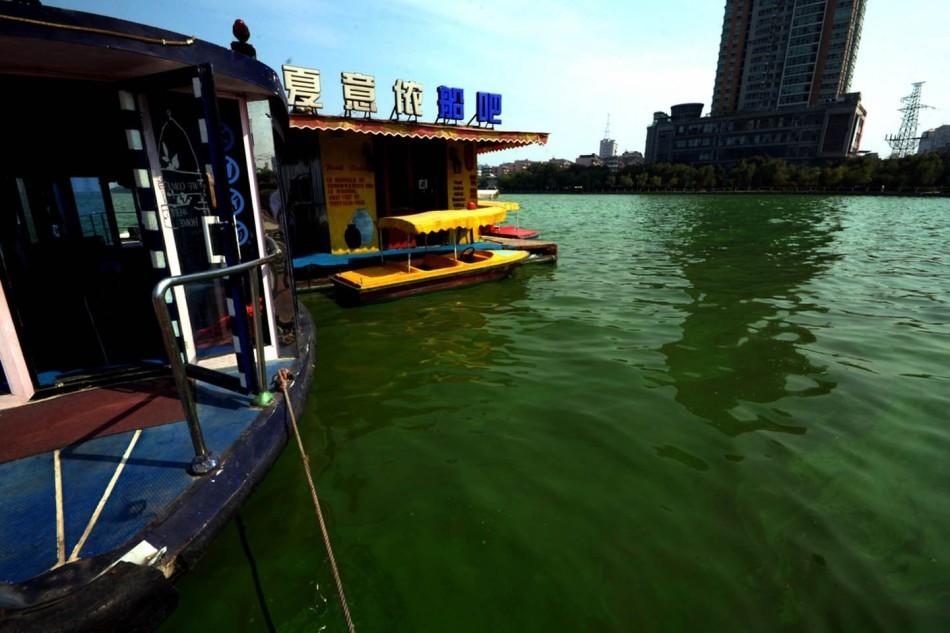 数百亩湖面如同被泼洒绿漆.南昌青山湖是南昌市城区范围内水域面