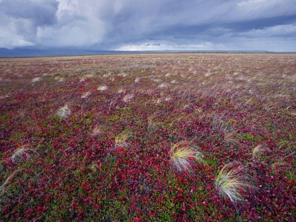 一周图赏 非洲沙漠壮观龙卷风 图